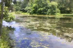 Do it yourself pond algae treatment with Bio Lake Clear